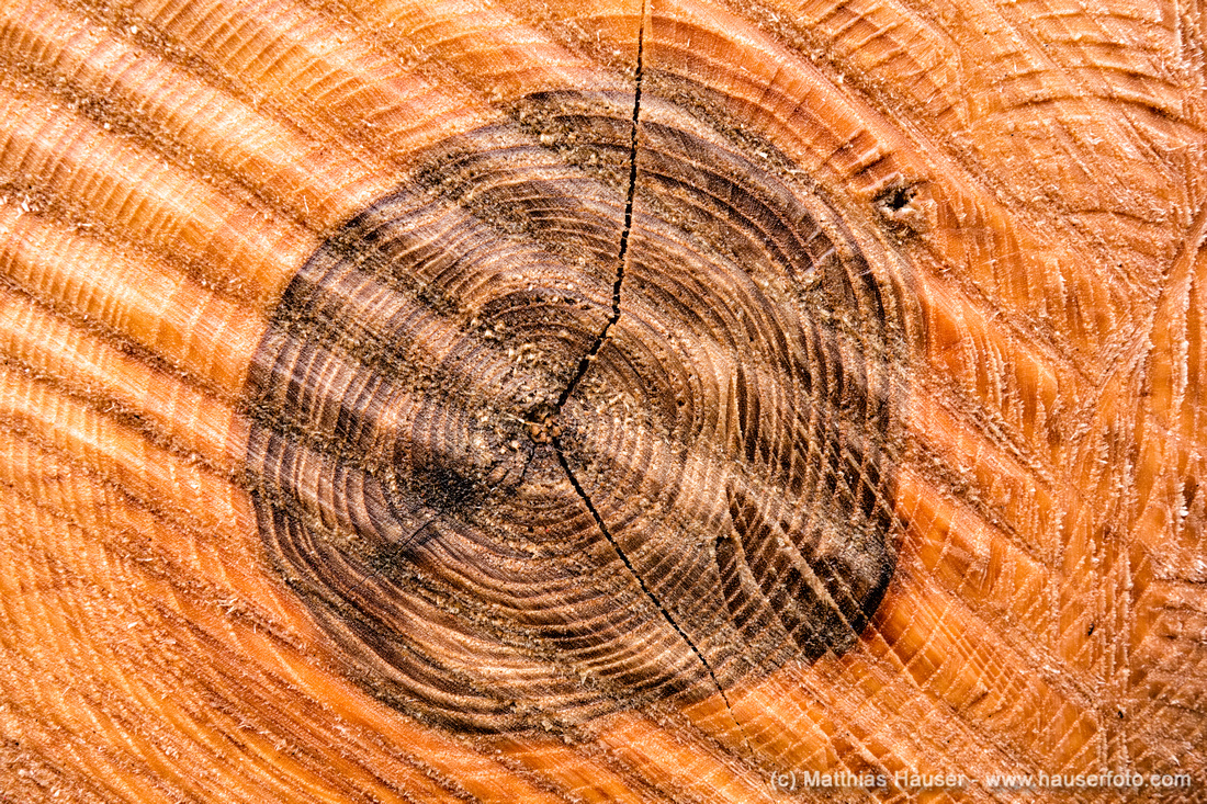 Annual rings of a tree Fine Art Print