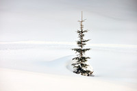 Solitary fir tree in winter with lots of snow minimalist image
