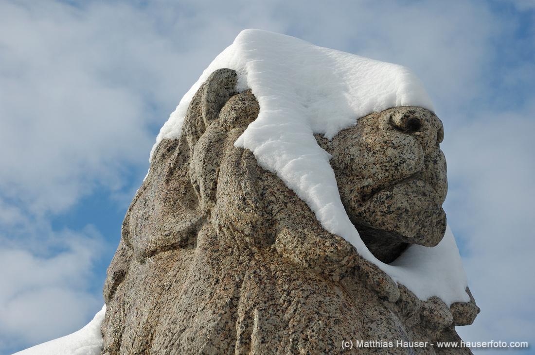 Verschneiter Kopf eines steinernen Löwen auf dem Karlsplatz in Stuttgart, Baden-Württemberg, Deutschland - Snow covered lion made of stone, Karlsplatz, Stuttgart, Baden-Wuerttemberg, Germany, Europe