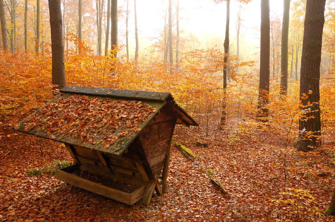 Futterkrippe im Wald - Herbstlaub rot und orange - Herbst im Naturpark Schönbuch