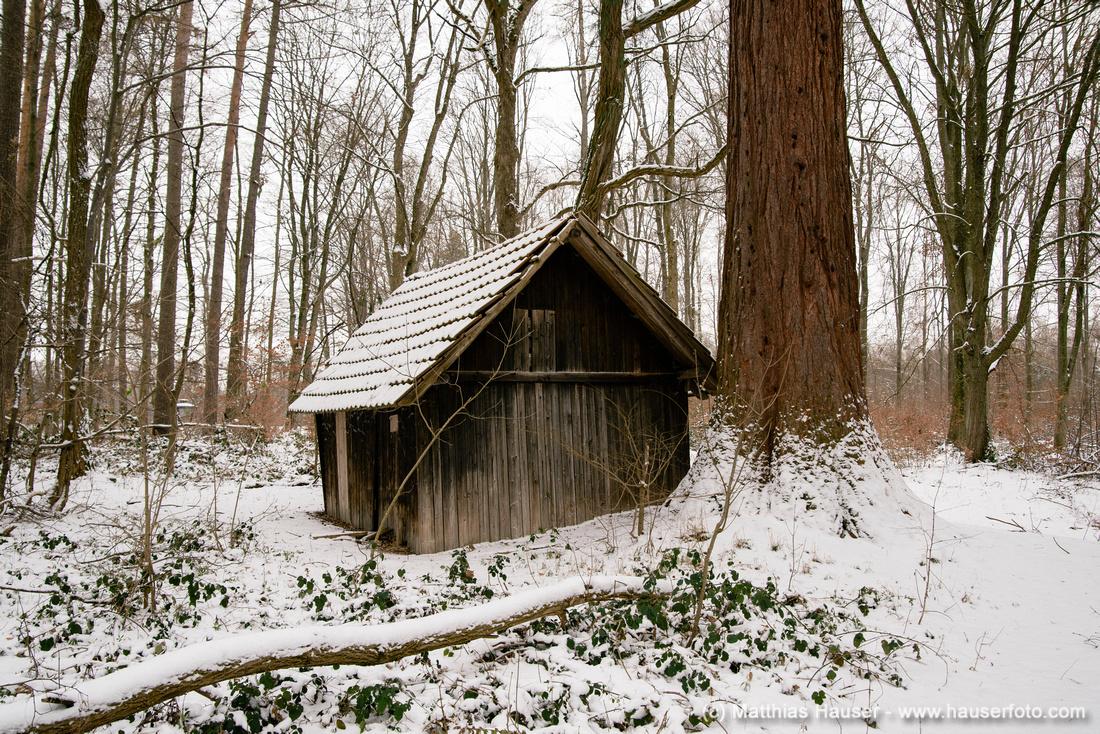 Hütte im Wald, im Hintergrund der Stamm eines Mammutbaumes, Naturpark Schönbuch zwischen Waldenbuch und Dettenhausen, Baden-Württemberg, Deutschland