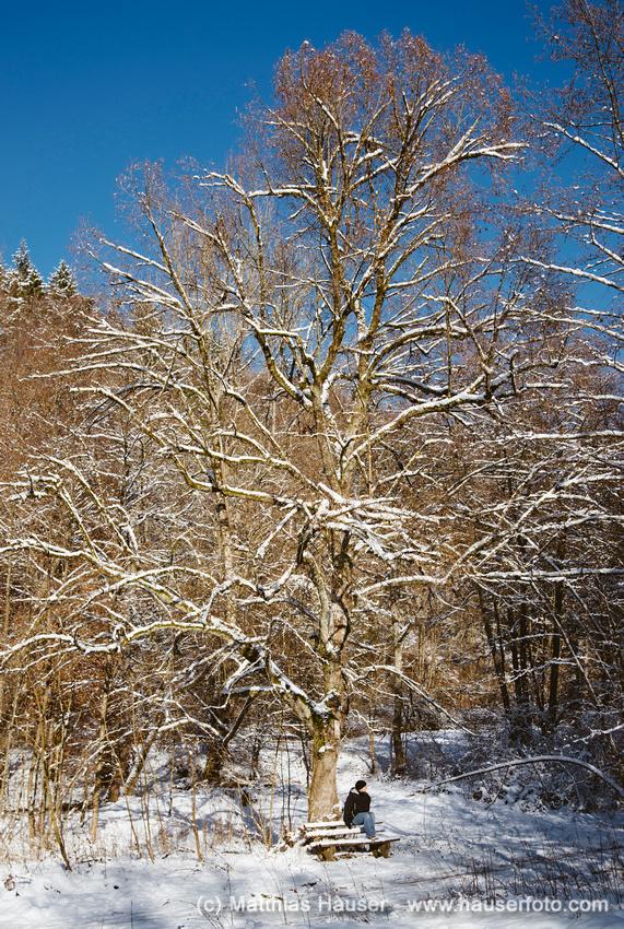 Sonniger Wintertag im Schaichtal, Naturpark Schönbuch, Baden-Württemberg, Deutschland