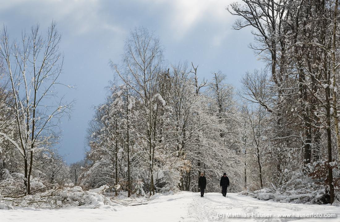 Spaziergänger im Naturpark Schönbuch im Winter, Baden-Württemberg, Deutschland