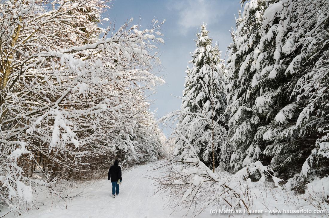 Spaziergang im verschneiten Wald, Naturpark Schönbuch, Baden-Württemberg, Deutschland