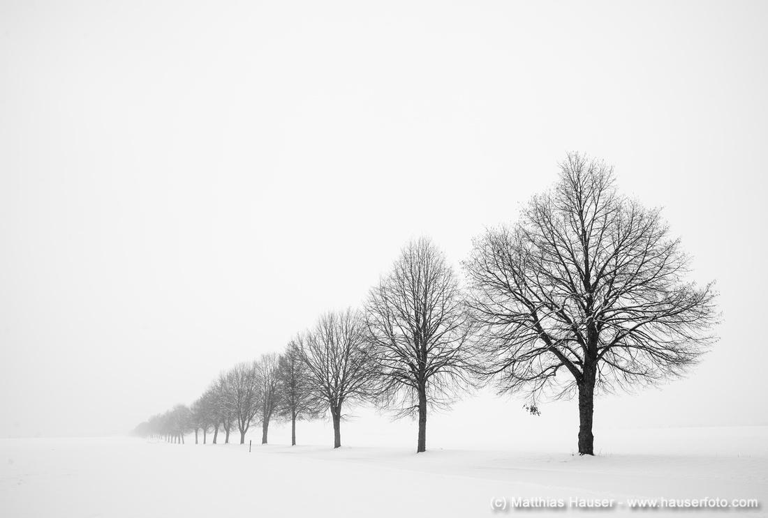 Die kahle Baumreihe der Bebenhäuser Allee im Winter bei viel Schnee, Naturpark Schönbuch, Baden-Württemberg, Deutschland