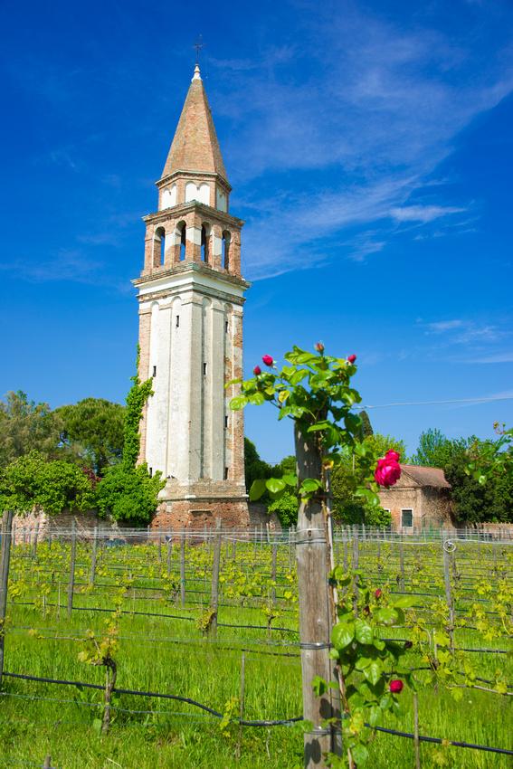 Tower and vineyard in Burano Venice