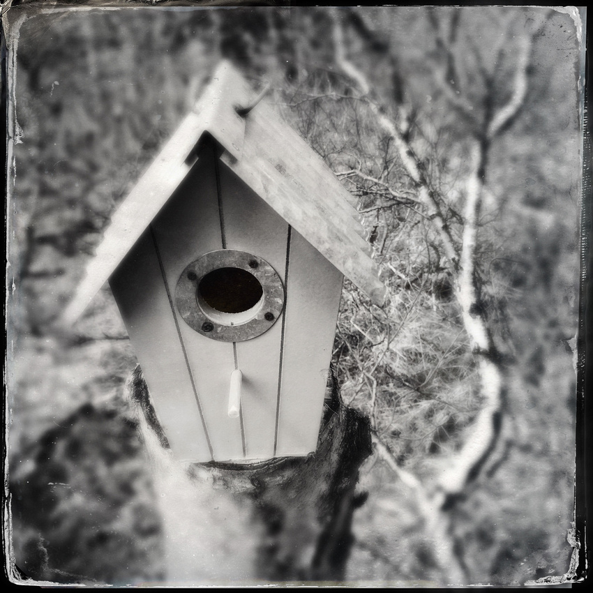 Black and white image of a nesting box with wetplate effect