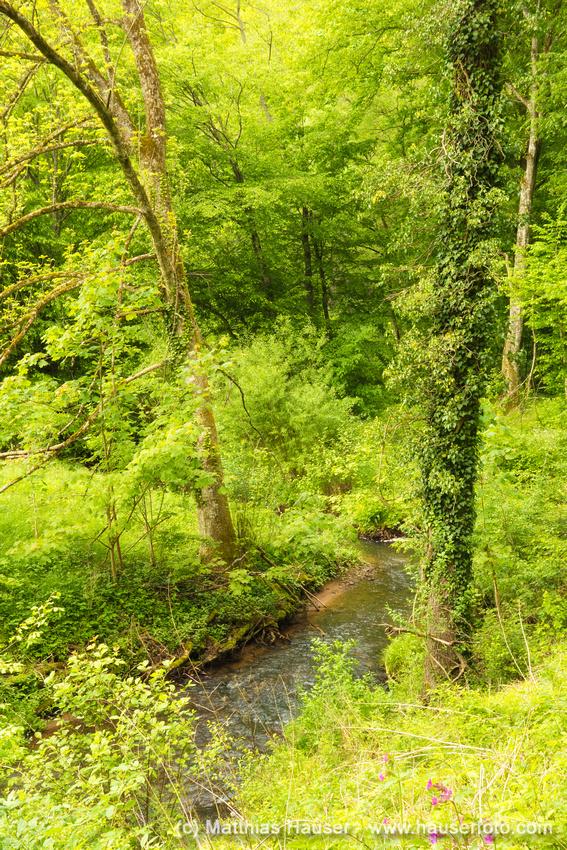 Bäume an der Schaich Schaichtal Naturpark Schönbuch