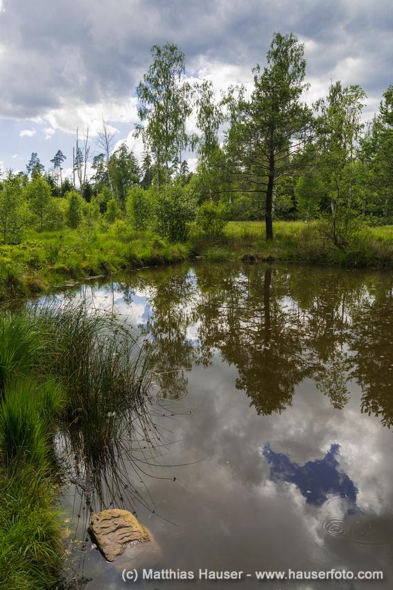 Birkensee im Naturpark Schönbuch, Baden-Württemberg, Deutschland