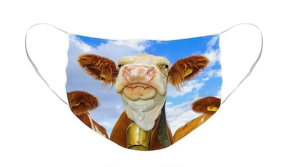 Cow Designer Face Mask