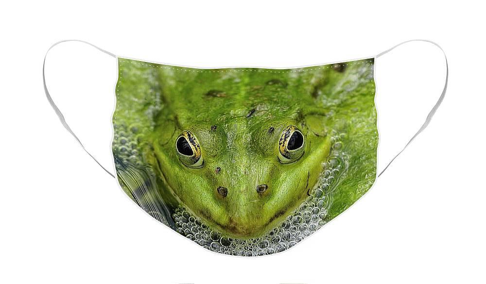 Cute Green Frog Designer Face Mask