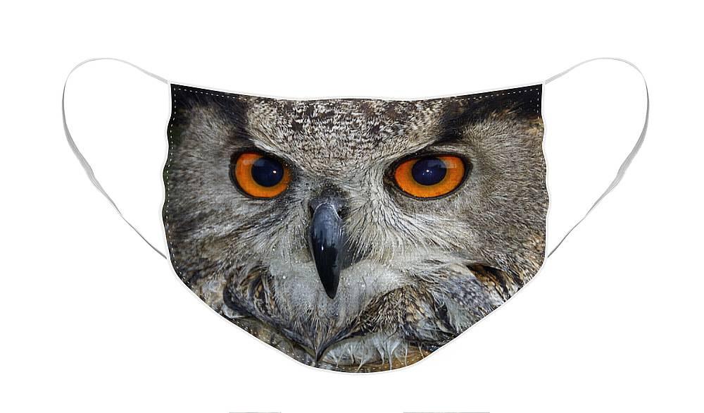 Owl Portrait Designer Face Mask