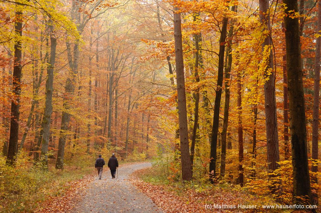 Naturpark Schönbuch bei Dettenhausen im Herbst, Baden-Württemberg, Deutschland