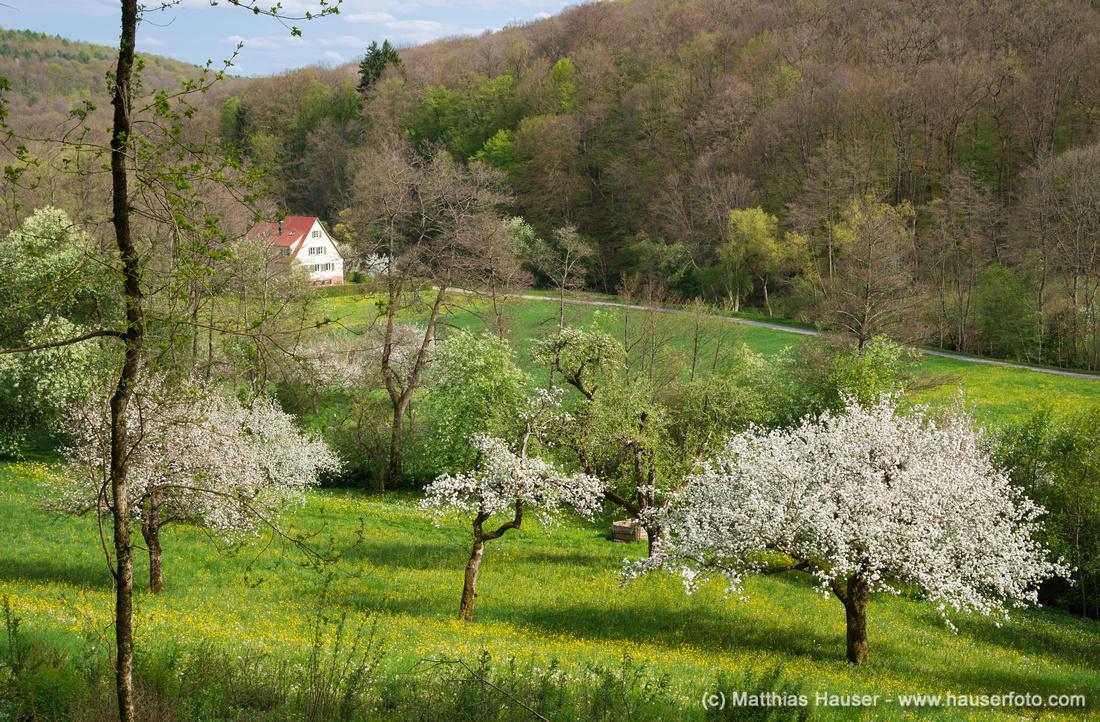 Frühling im Naturpark Schönbuch, Goldersbachtal bei Bebenhausen