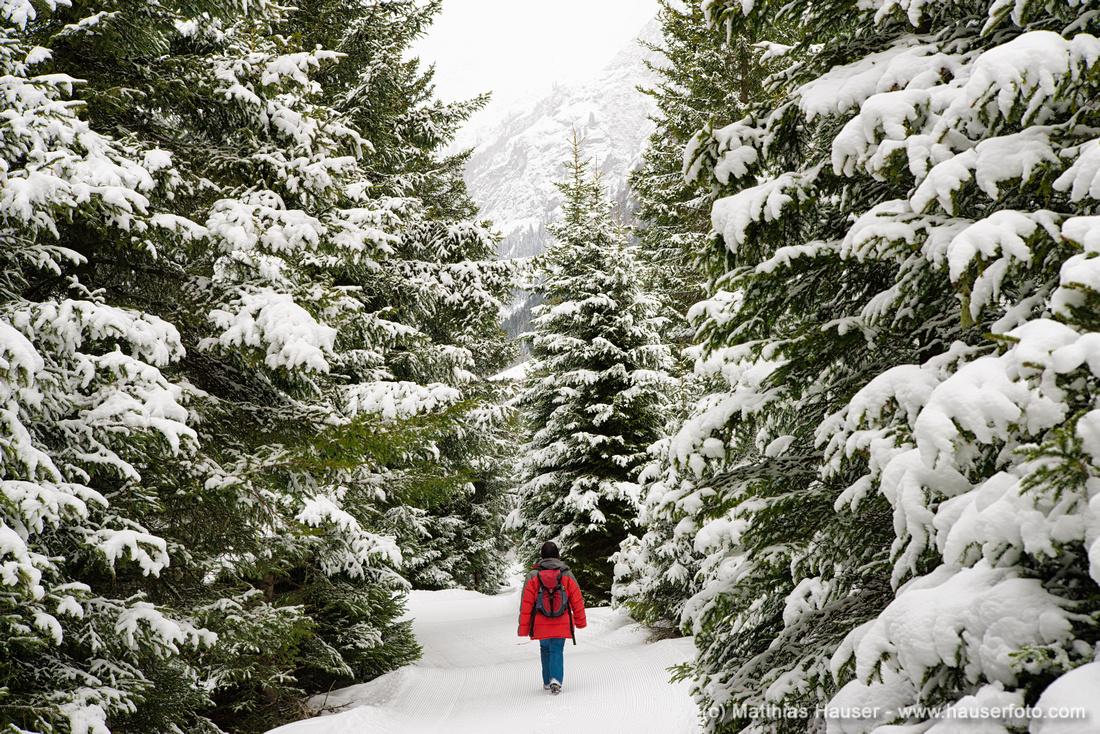 Tief verschneiter Wald - Winterwandern im Pitztal