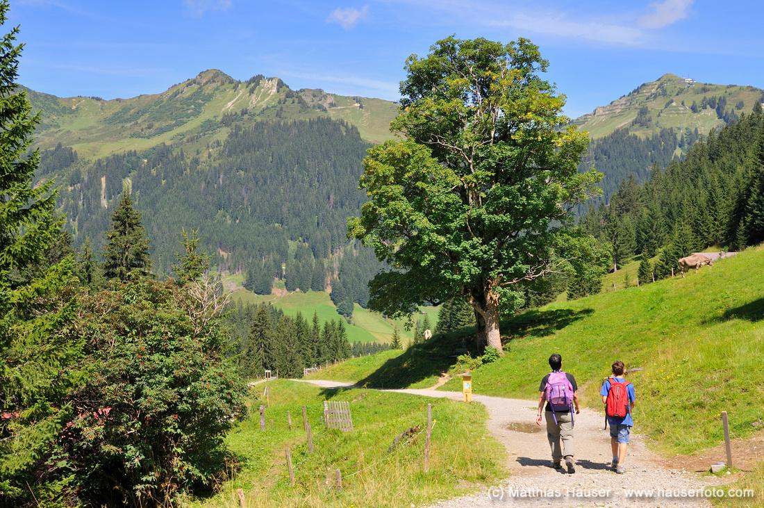 Wanderung auf dem oberen Bärguntweg im Kleinwalsertal, Vorarlberg, Allgäuer Alpen, Österreich