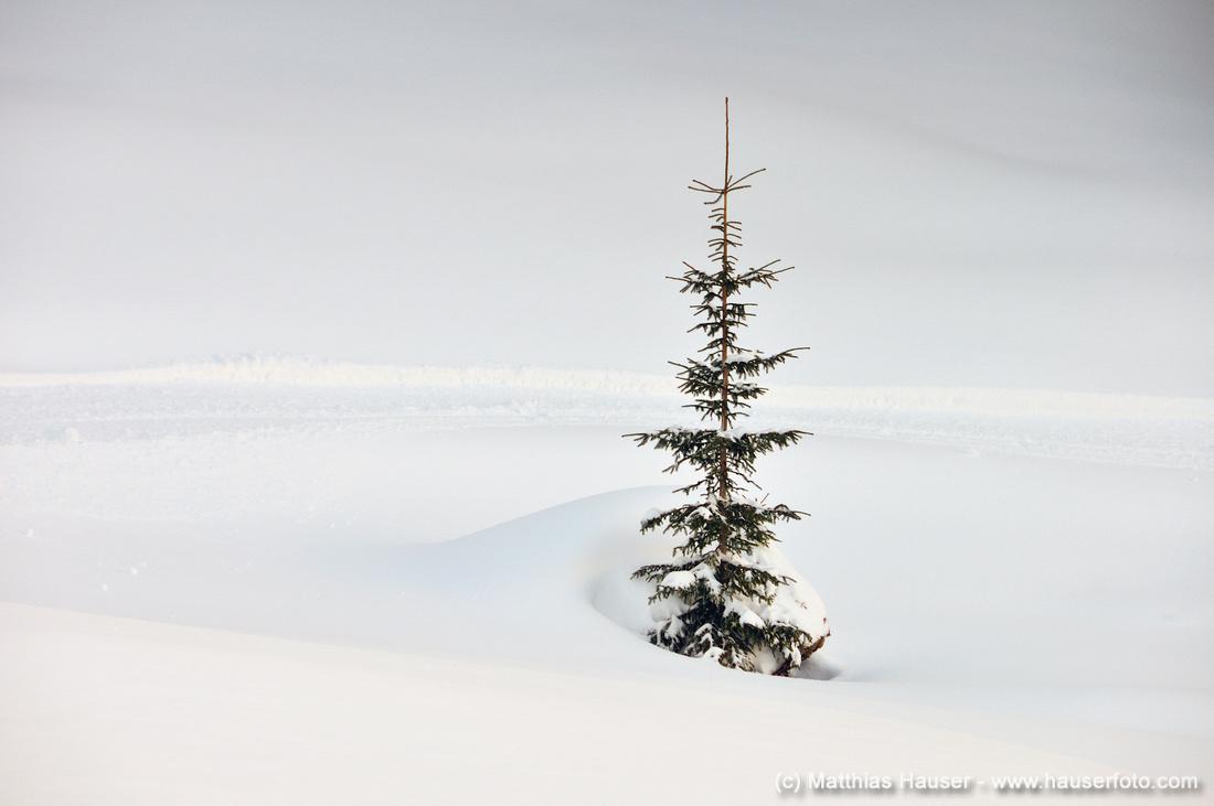 Spitze eines einsamen Baumes, Schneemassen im Winter