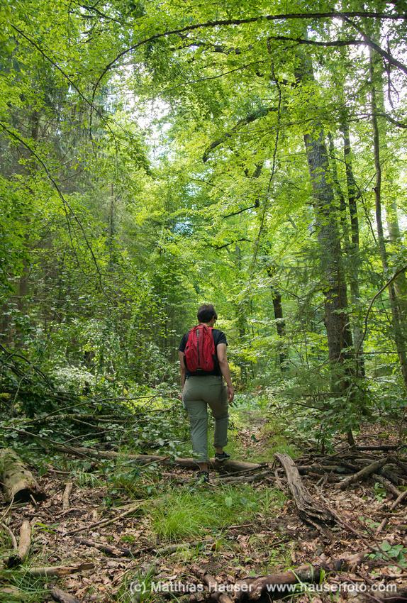 Wandern im Naturpark Schönbuch, Baden-Württemberg, Deutschland