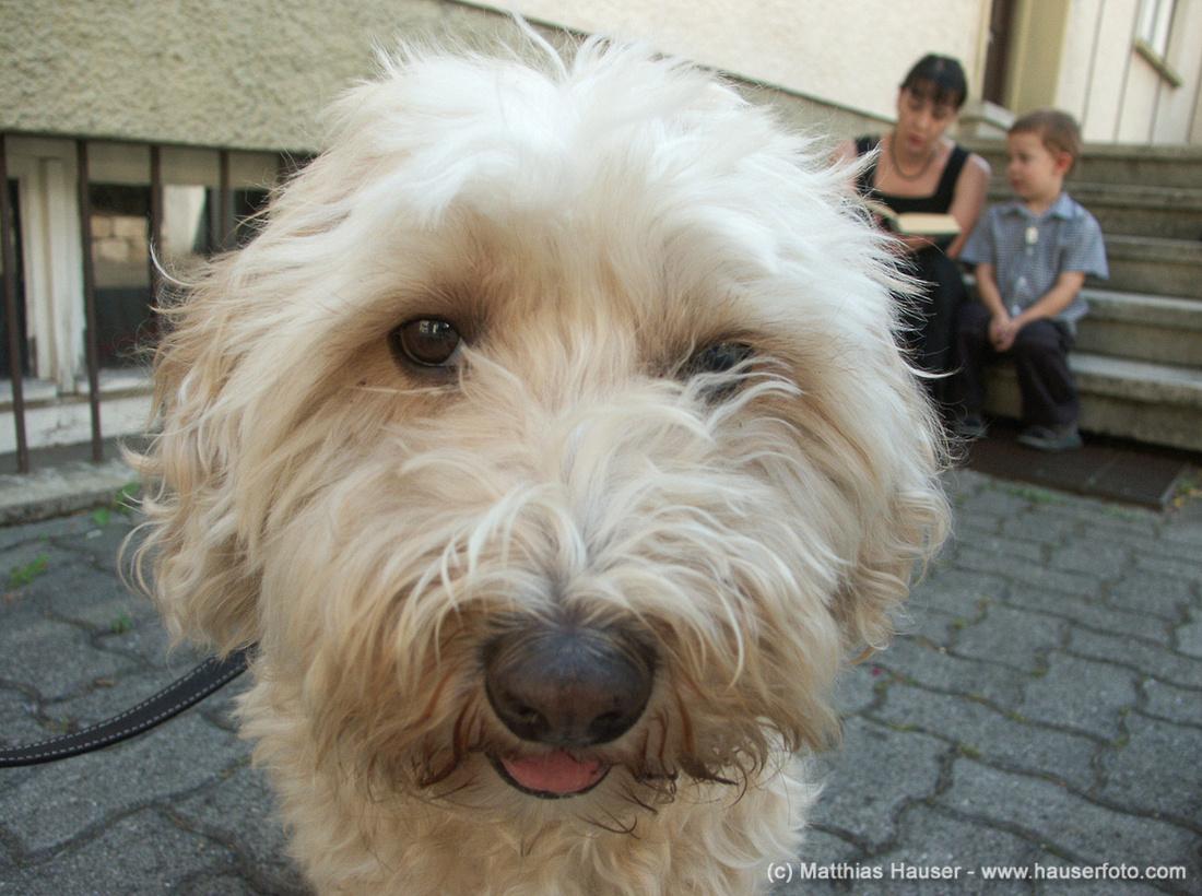 Neugieriger Hund bei Hochzeit