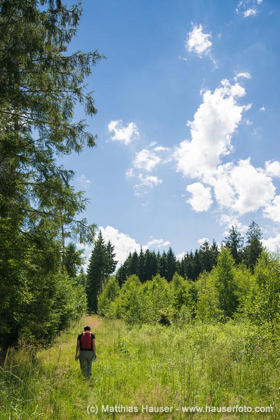 Spaziergang im Naturpark Schönbuch
