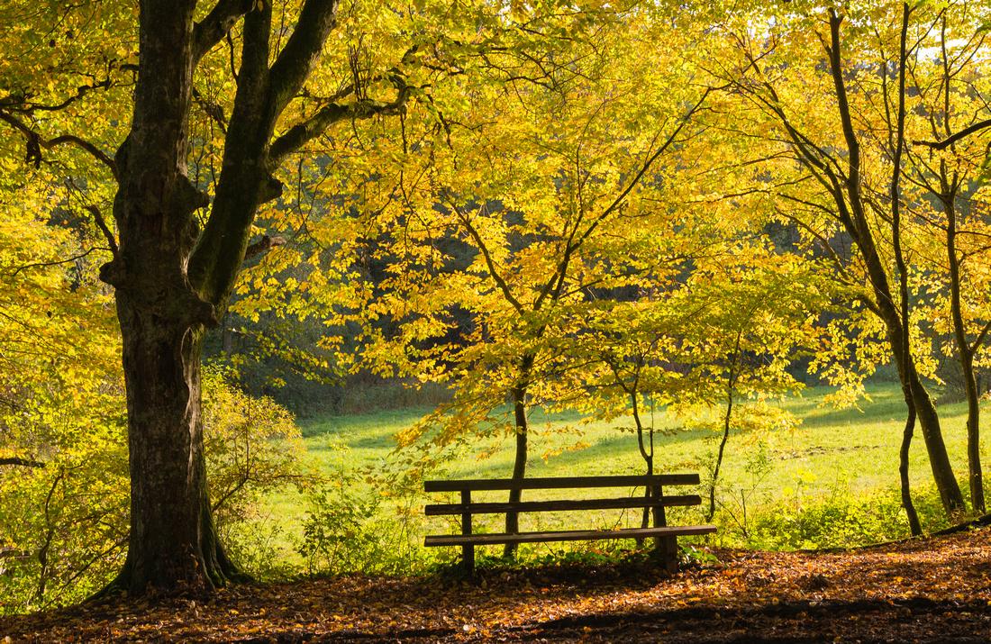 Golden leuchten die Blätter der Bäume - Naturpark Schönbuch im Herst