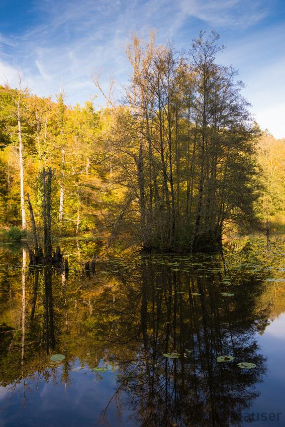 Bäume mit Herbstlaub spiegeln sich im blauen Wasser: Schlüsselsee, Naturpark Schönbuch