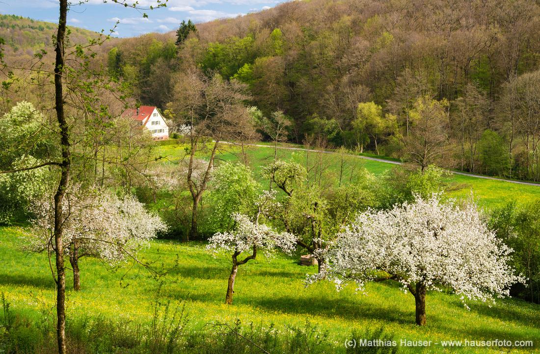 Frühling im Naturpark Schönbuch im Goldersbachtal bei Bebenhausen