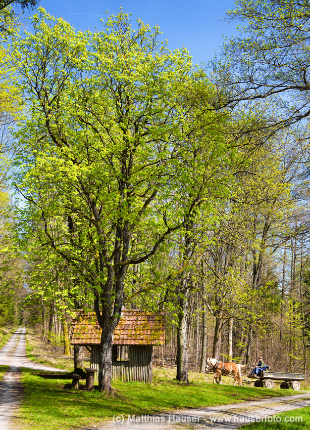 Eisenbachhain Naturpark Schönbuch Deutschland