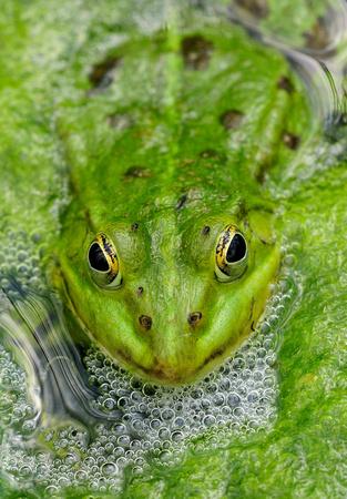 frosch wasser