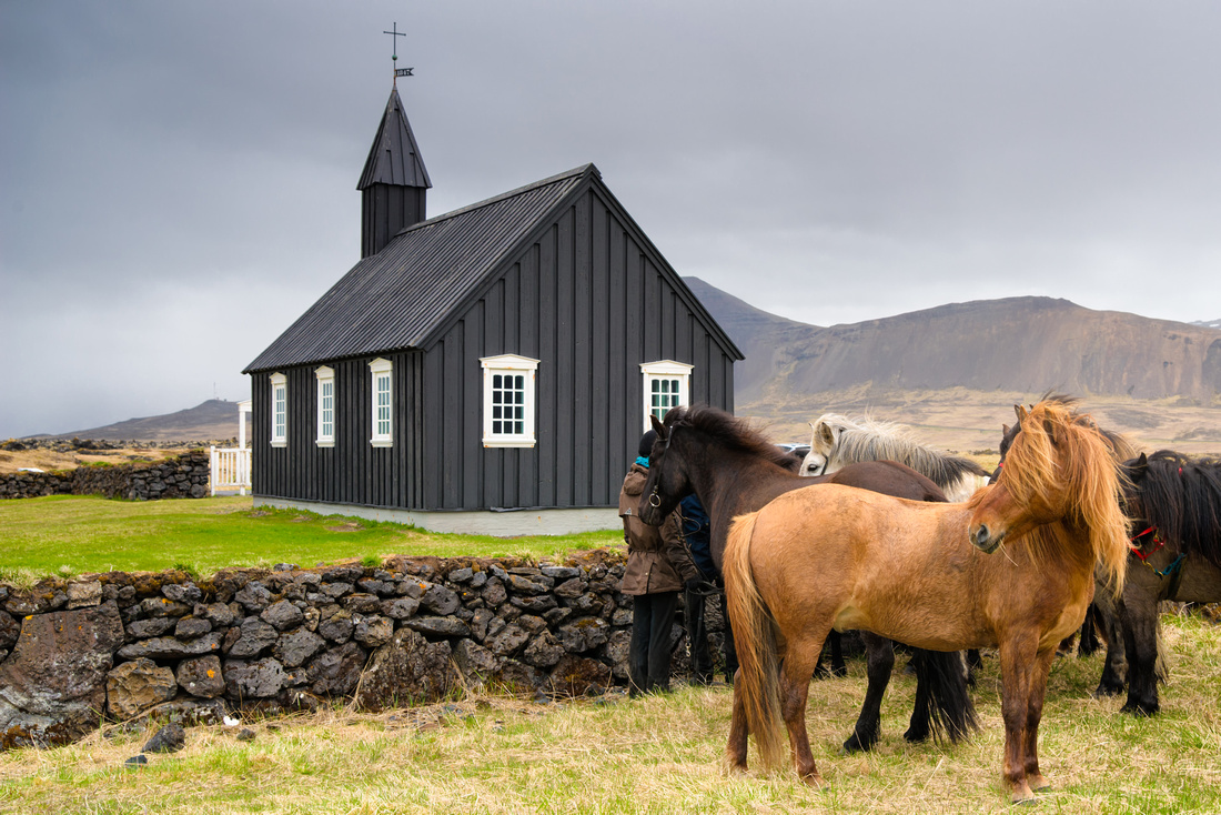 Budir black church and Icelandic horses Snaefellsnes Iceland