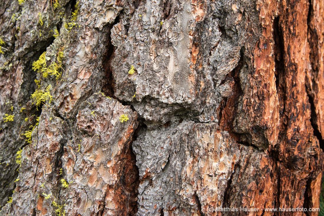 Tree bark macro photography
